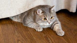 Inilah Makanan Penggemuk Kucing Sesuai Jenisnya